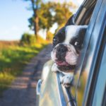 How to make your car pet-friendly